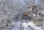The road to the cemetery in winter